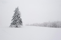 snow_white_and_the_hundred_trees_512x341