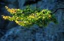 Ast mit Herbstblättern