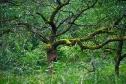 alte Obstbäume auf der Südseite des Seeberg